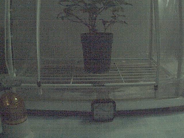 温室カメラの画像です。自動更新します。